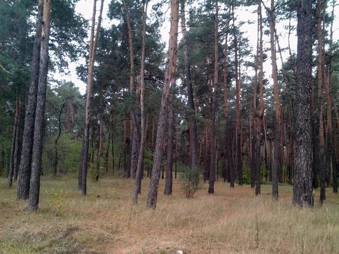 ЖК «Полесская» и «Вудстория» на Рембазе рядом парк