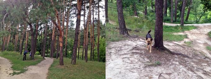 ЖК Квартал Тарасовский лес