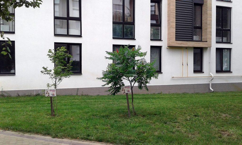 ЖК Белый Шоколад Центр двор и деревья